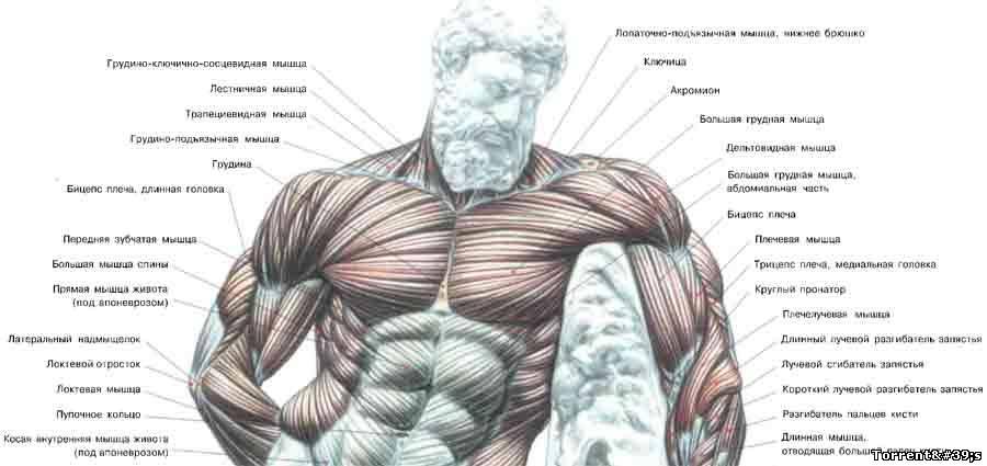 Новинки клумб для своего двора. Как накачать грудь, грудные мышцы.